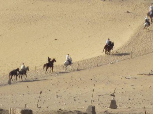 Horses In Giza Desert