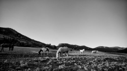 Horses On Ranch Land