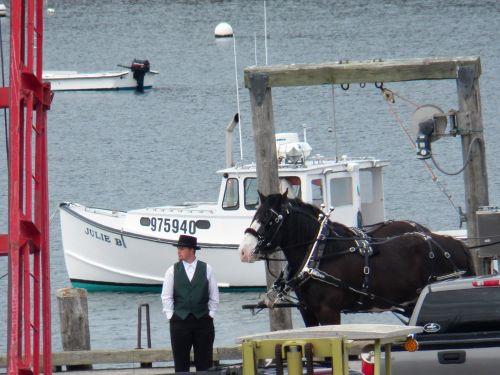 Horses On Town Pier