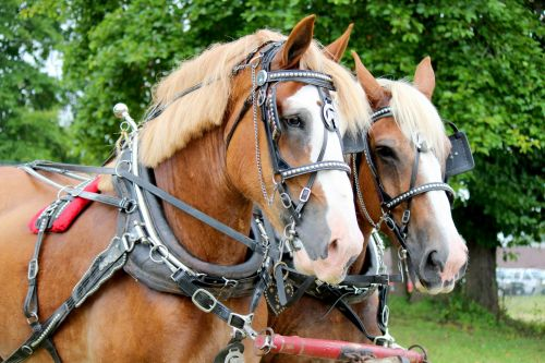 Horses Pulling Cart