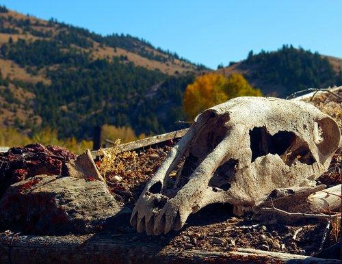 horse's skull on sod roof  skull  bone
