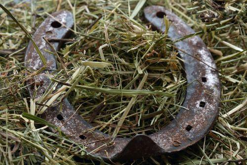 horseshoe lucky charm hay
