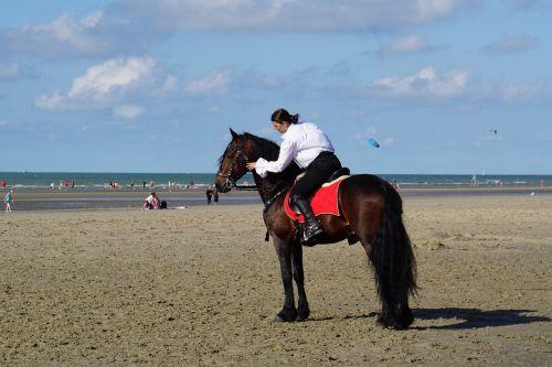 horsewoman belgian rider horse show