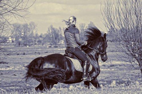 horsewoman  rider  horse