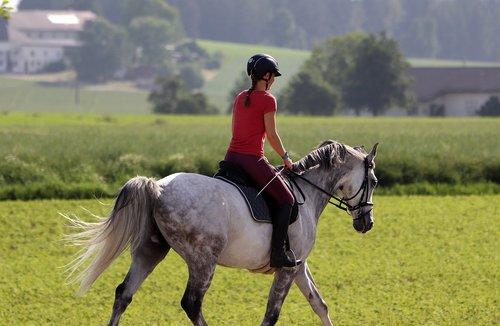 horsewoman  horse  ride