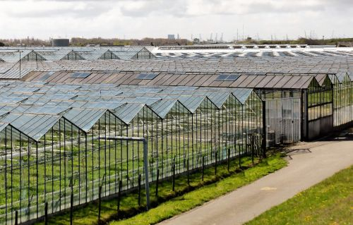 horticulture agriculture greenhouses