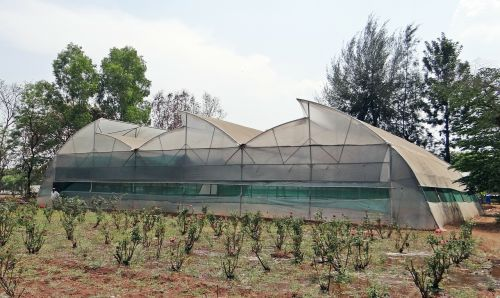 hothouse greenhouse forcing house
