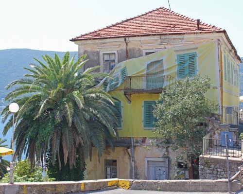 house palm tree tree