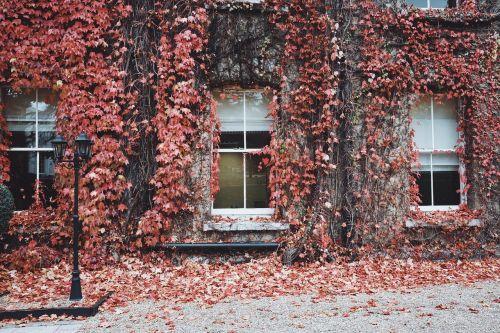house windows glass