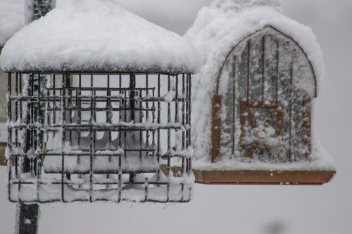 house birdhouse nature