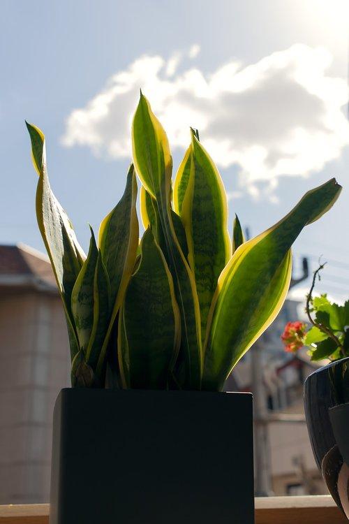 house plant  flower pot  sky