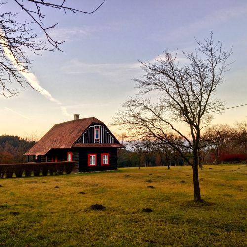 house tree grass czech republic