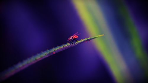 housefly insect leaf