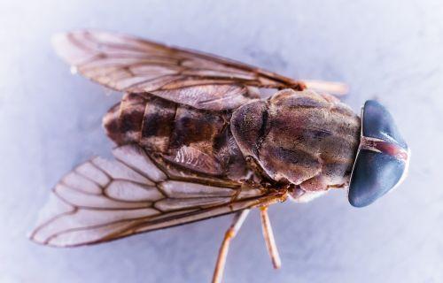 housefly fly macro