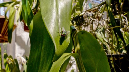 Housefly Outdoors