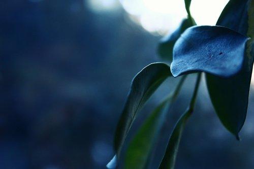 houseplant  leaf  green