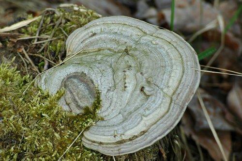 hub  mushroom  forest