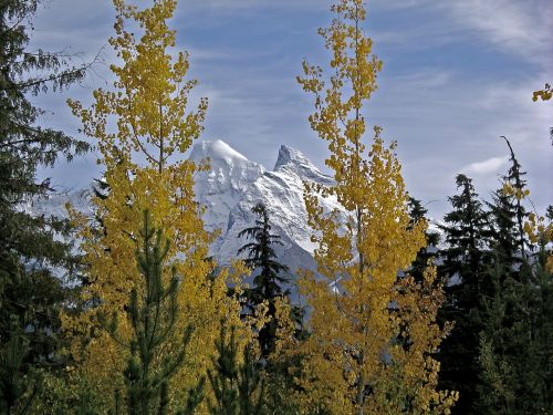 snowcapped mountains autumn leaves winter