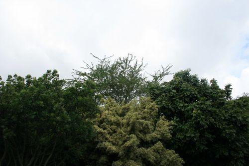 Hues Of Green In Subtropics