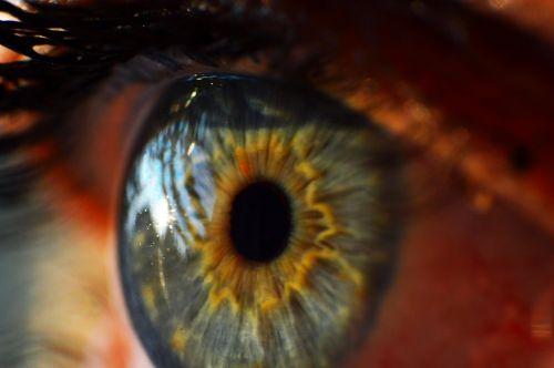human eye iris macro