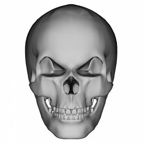 kaukolė, žmogus, priekinis, siaubas, veidas, saldus, Halloween, mirti, dingo, juoda, žandikaulis, kapas, prarastas, gyvenimas, galva, nuobodus, fitnesas, pilka, dantys, tamsi, šypsena, kaulas, Išgyti, mirti, kritęs, kūnas, miręs, Burna, mirtis, gedėti, kapinės, sveikata, gamta, drumstas, nosis, makaronai, menas, žmogaus kaukolė 2