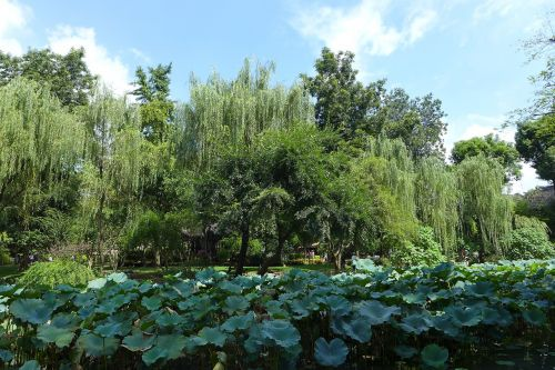 humble administrator's garden autumn lake