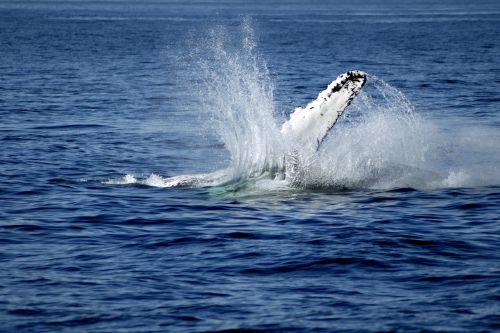whale fin sea