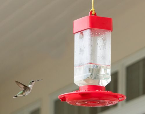 hummingbird flying feeder
