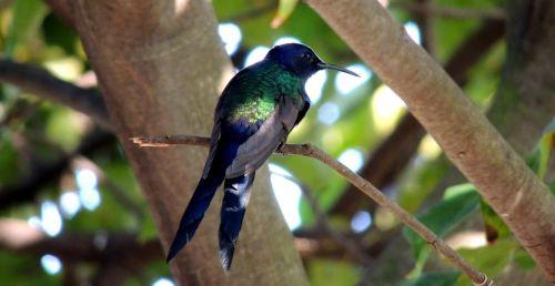hummingbird bird paige