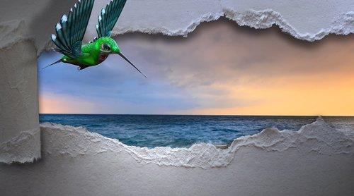 hummingbird  sea  breakthrough