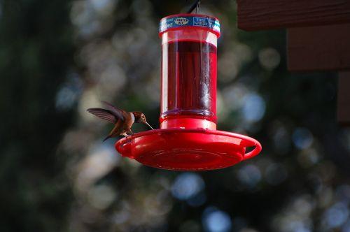 hummingbird nectar nature