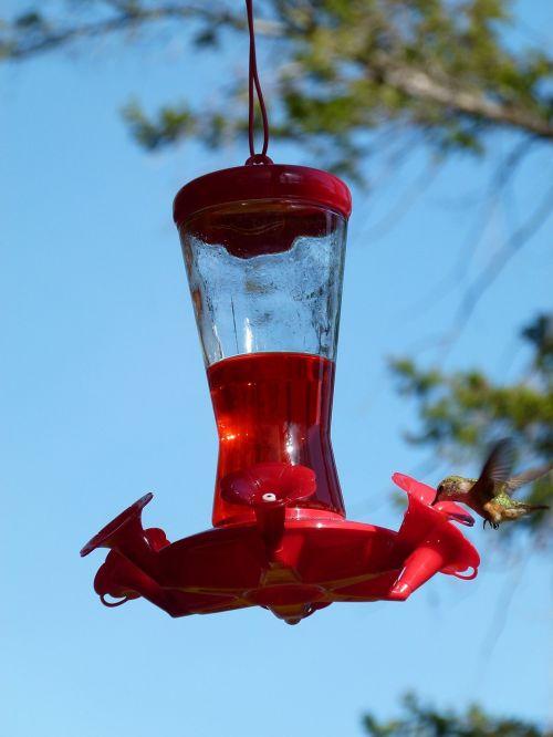 hummingbird feeding station bird