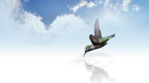 hummingbird bird fly