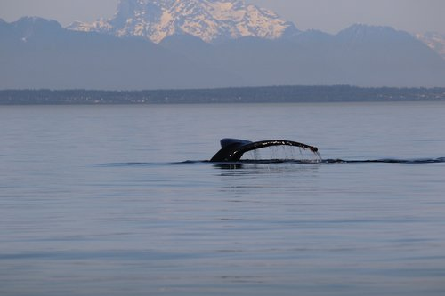 humpback  whale tail  mountain