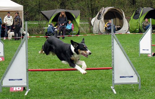 hundesport dogs active
