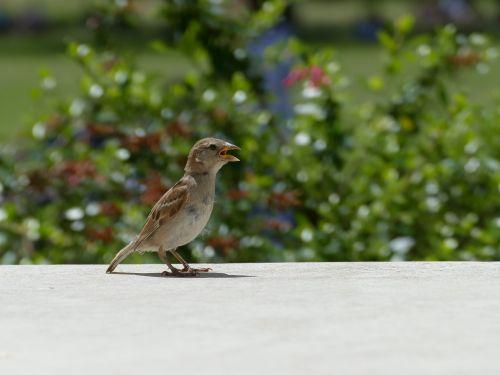 hungry bird lisbonne