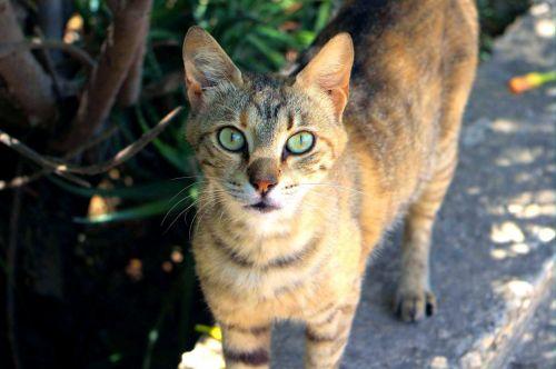Hungry Street Cat