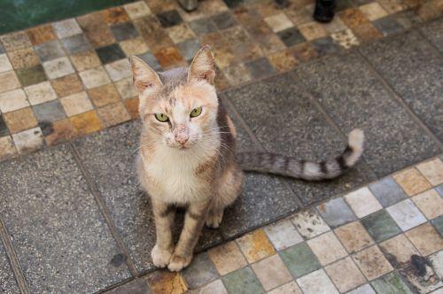 Hungry Tabby Street Cat
