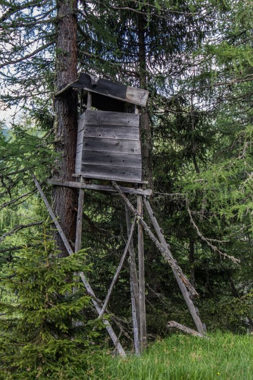 hunter hunter was forest