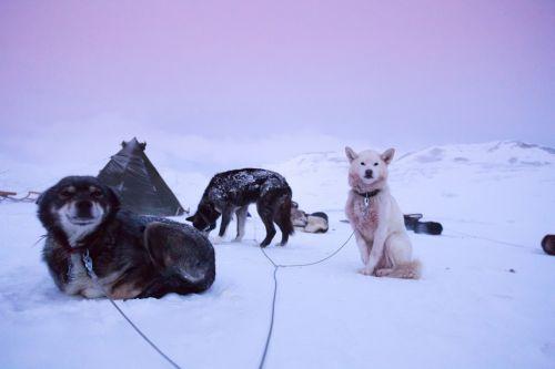 husky adventure travel