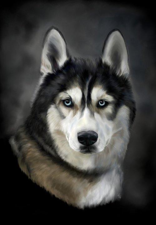 husky  dog  big dog