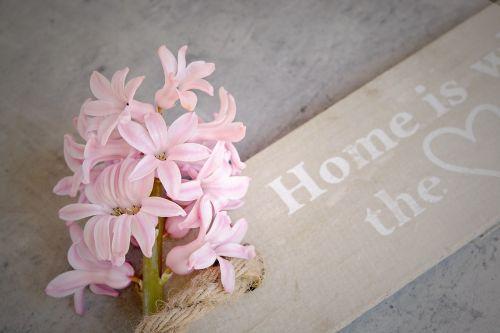 hyacinth pink flowers