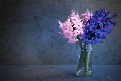 hyacinth flowers spring flower
