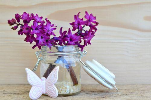 hyacinth flower blossom