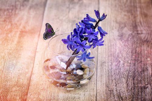 hyacinth flower fragrant flower