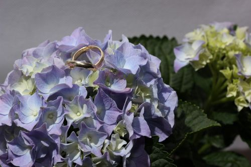 hydrangea rings gold ring
