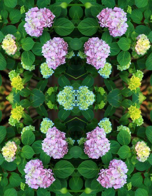 Hydrangea Repeat Arranged