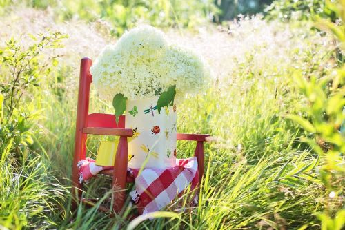 hydrangeas pitcher summer