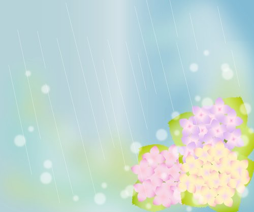 hydrangeas  rainy background  blurred background