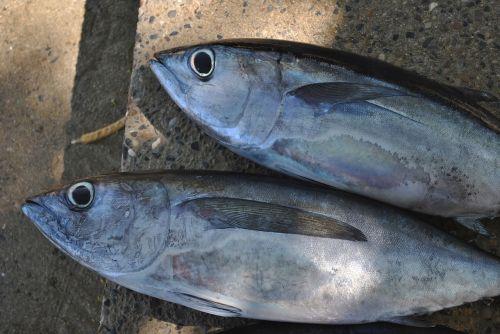 i fishes animal eyes